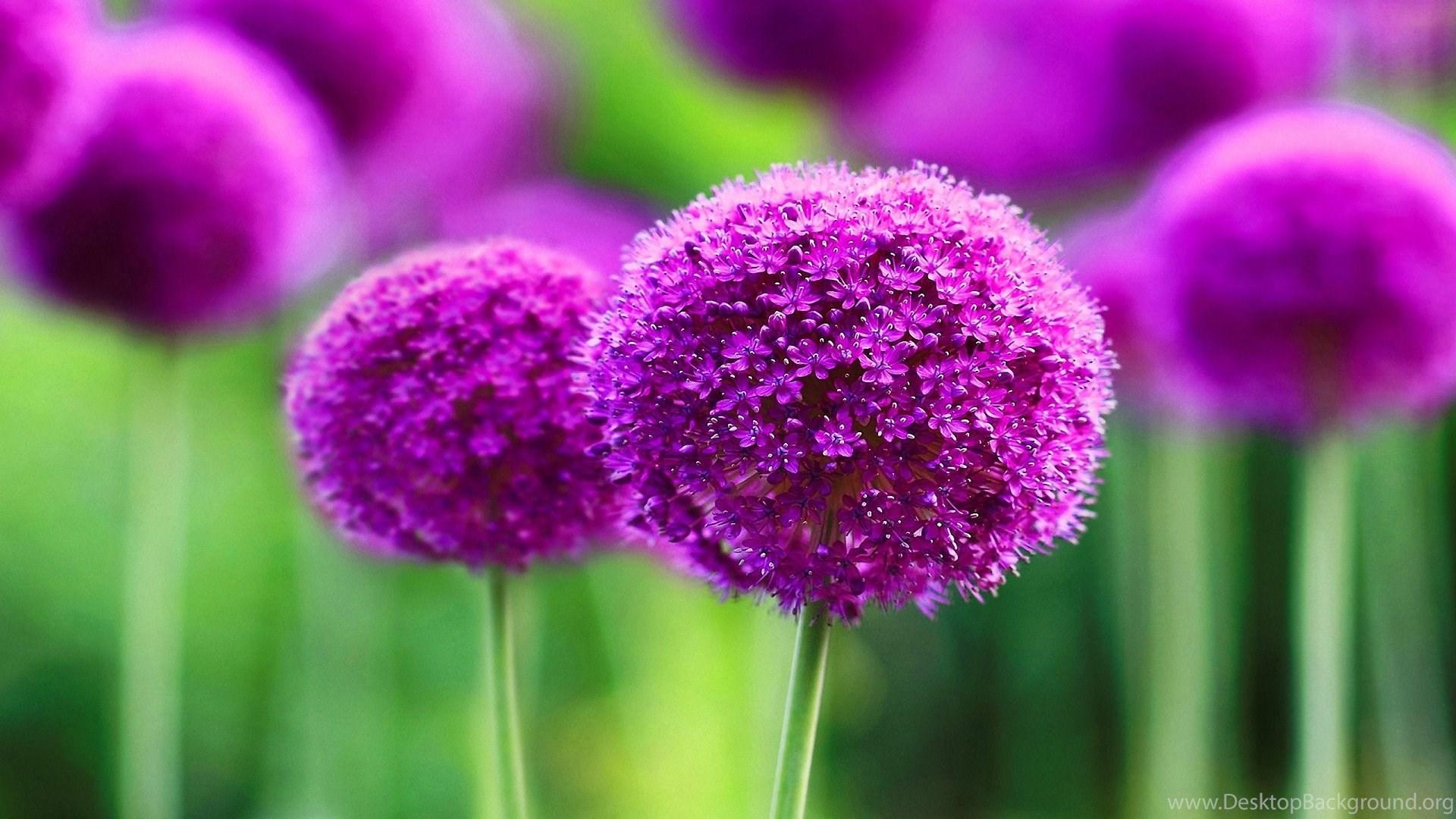 Good Wallpaper High Quality Purple - 788859_flower-wallpaper-beautiful-purple-flower-wallpapers-high-quality_1920x1080_h  Best Photo Reference_773778.jpg