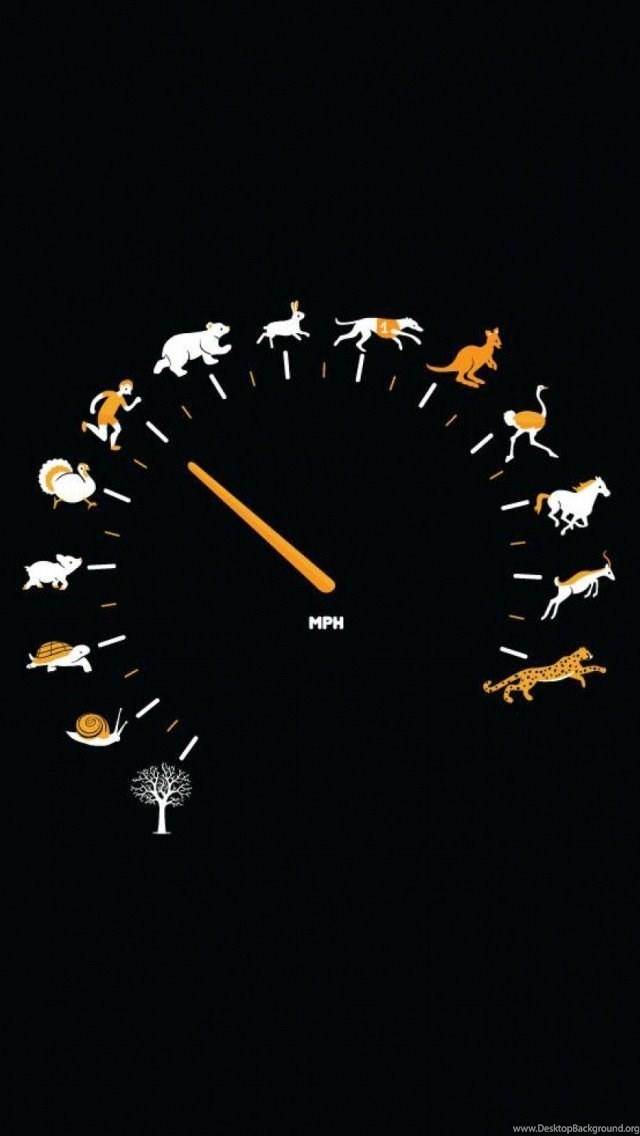 Funny Gauge Animals Speed IPhone 5 Wallpapers IPod HD Desktop Background