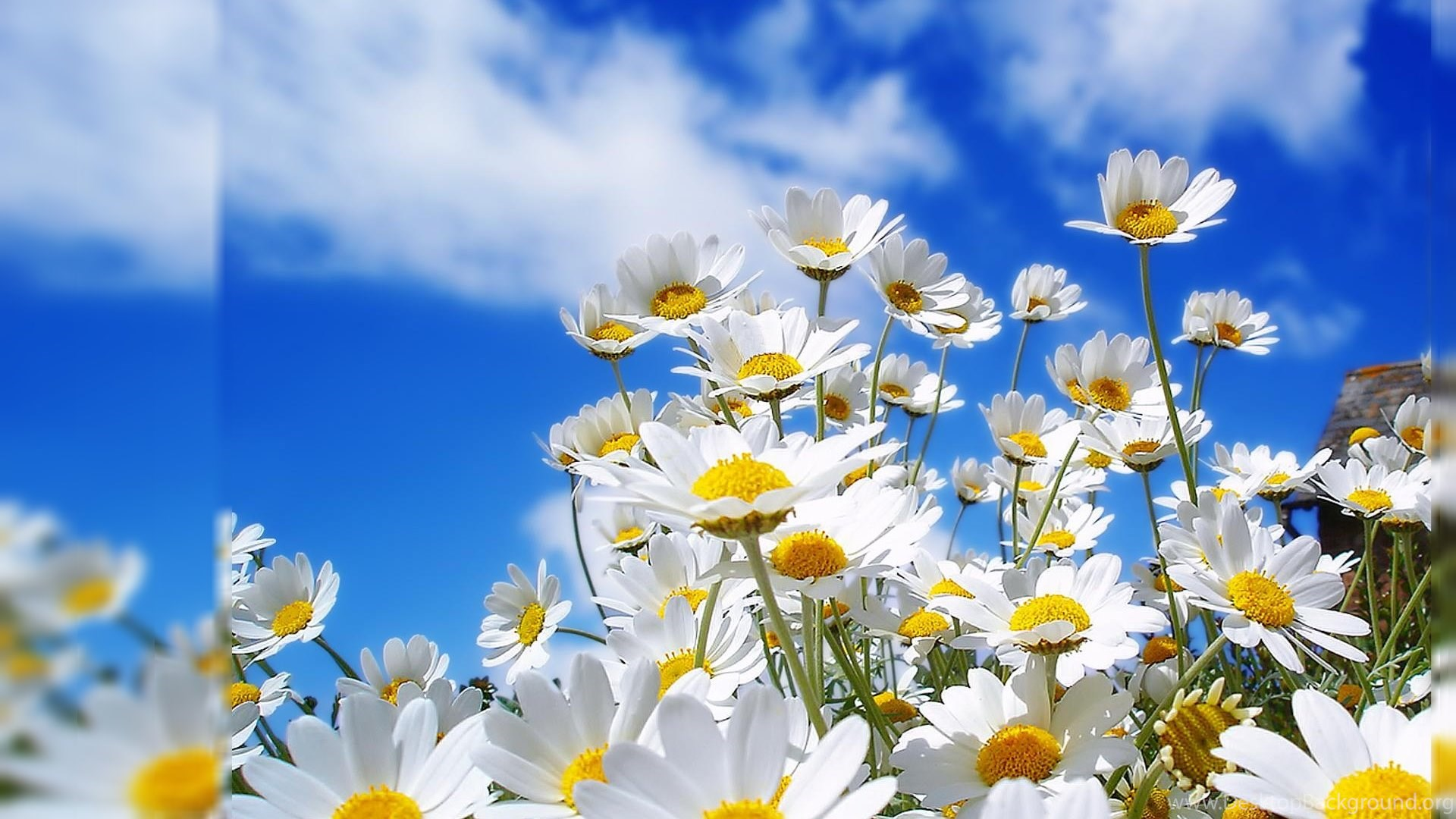 Flowers Pictures For Desktop Backgrounds Hd Wallpapers Desktop Desktop Background