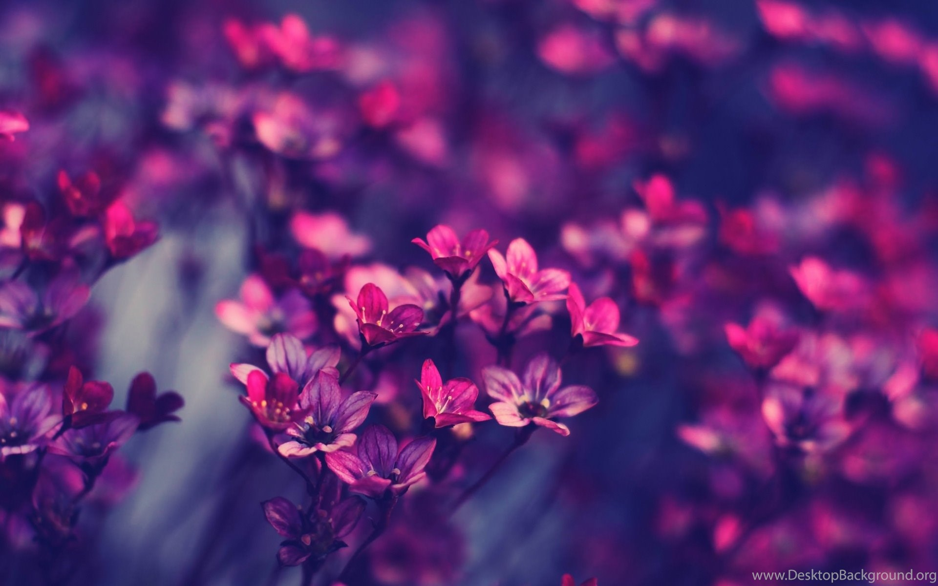 Floral Backgrounds Tumblr Wallpaper Images Kemecer Com Desktop