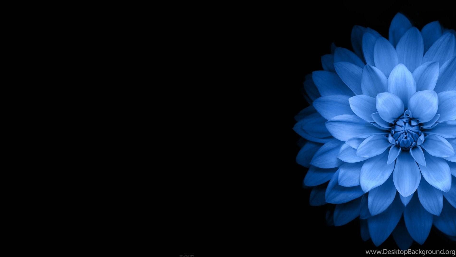 Flowers Blue Black Dark Wallpapers Hd Desktop And Mobile