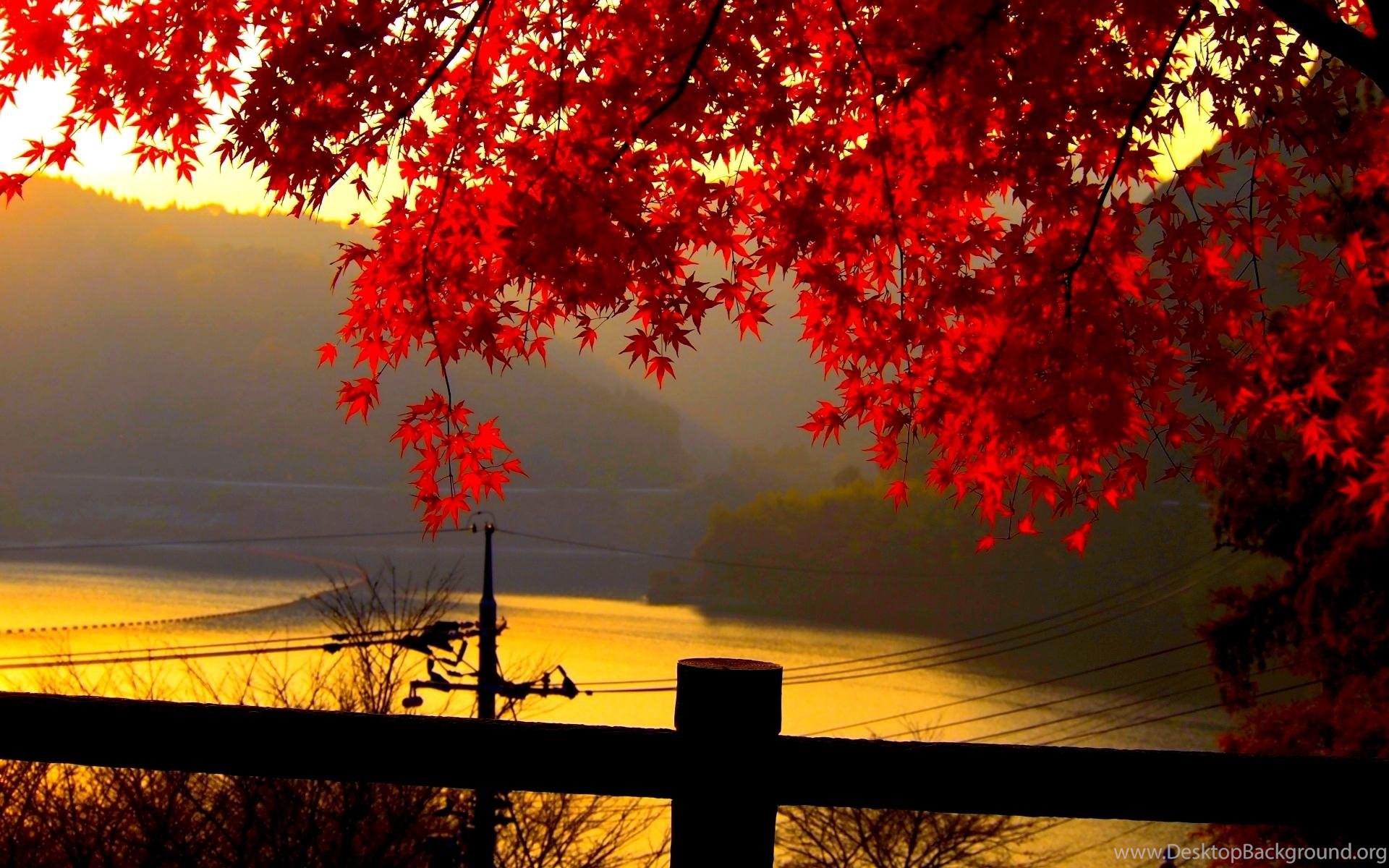 Autumn Leaves Stream Wallpapers Hd Desktop Wallpapers Desktop Background
