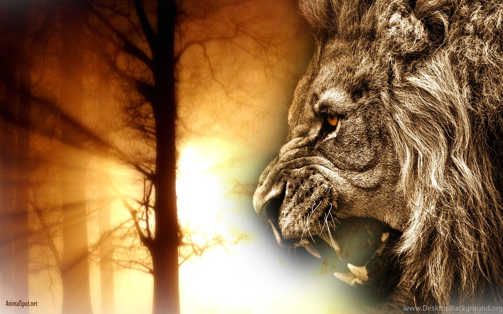 Lion Face Wallpapers Roar Desktop