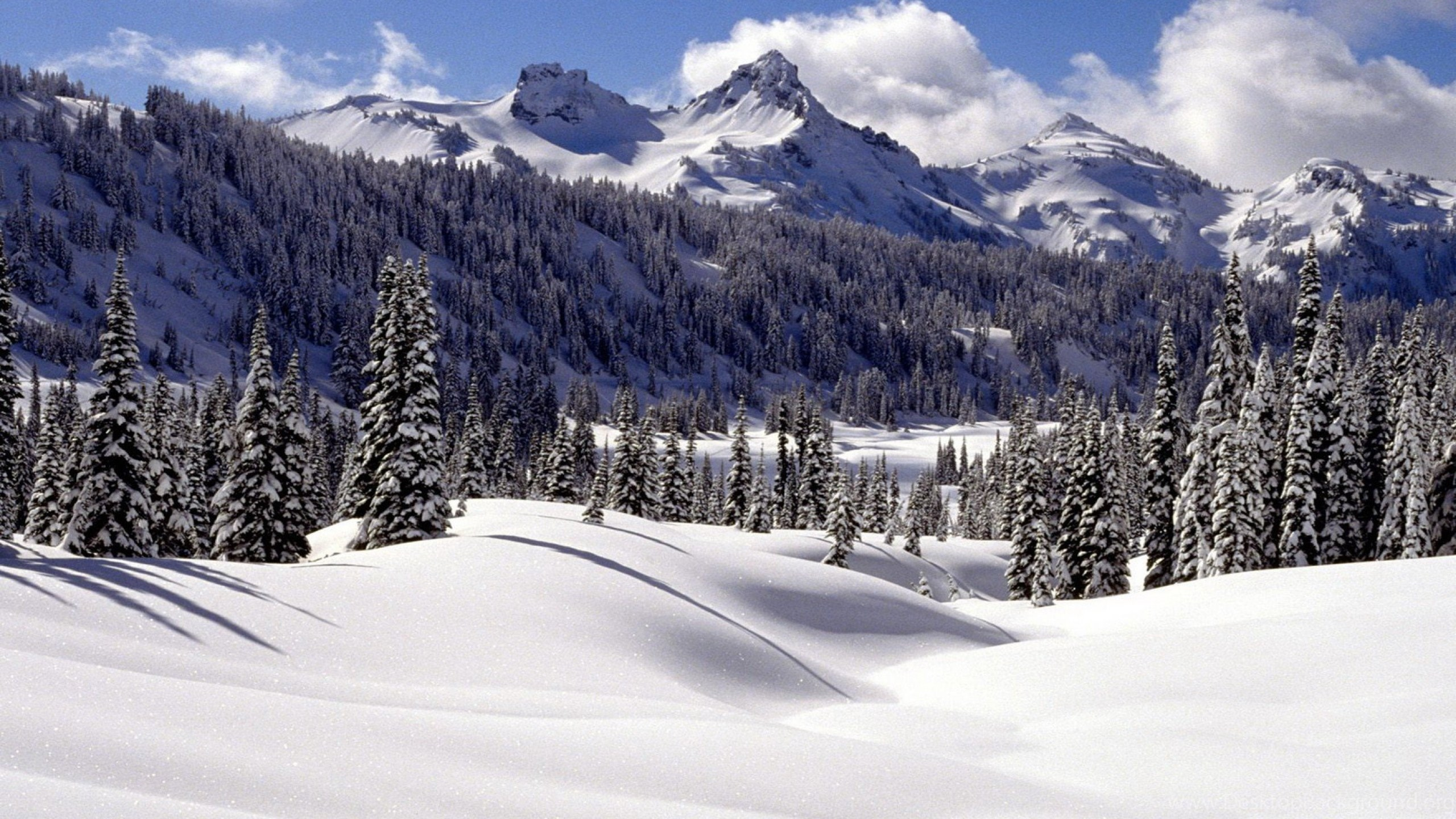 Winter Scenes, Cool, 2560x1440 HD Wallpapers And FREE Stock Photo