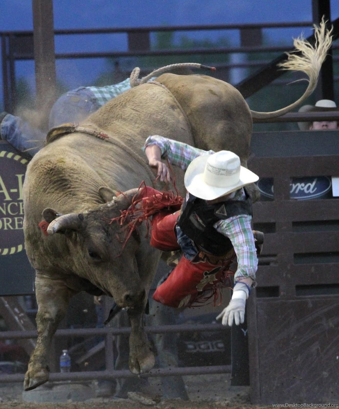 Top pbr bull riding wallpapers desktop background - Bull riding wallpapers ...