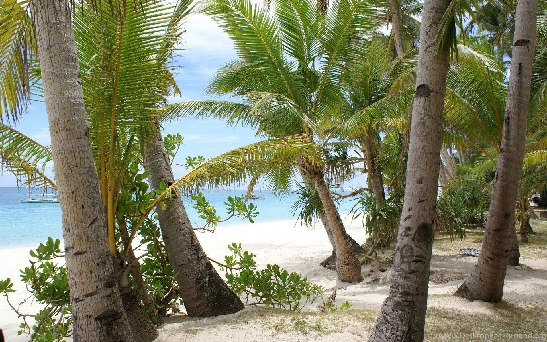 Coconut Trees HD Wallpaper Images Pictures Photos Download Page 0