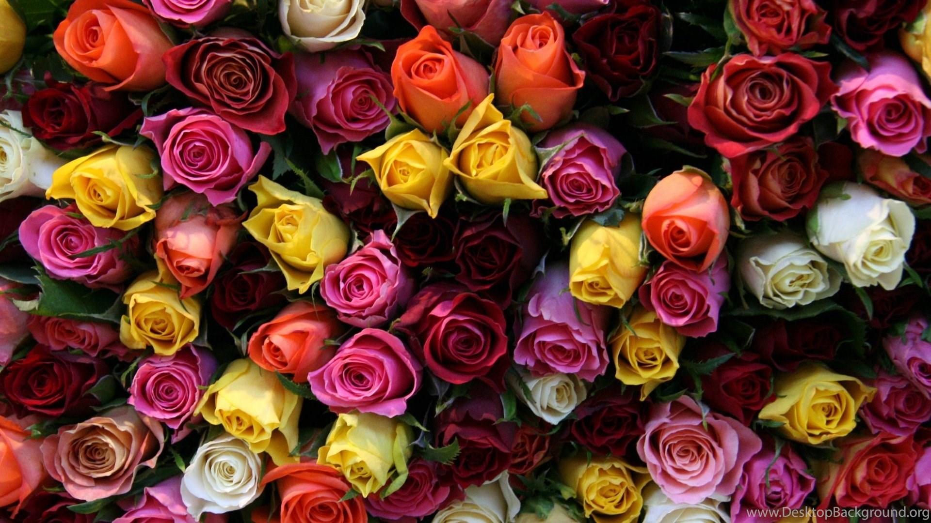 Beautiful Flower Bouquet Love Flowers Roses Full Screen Image