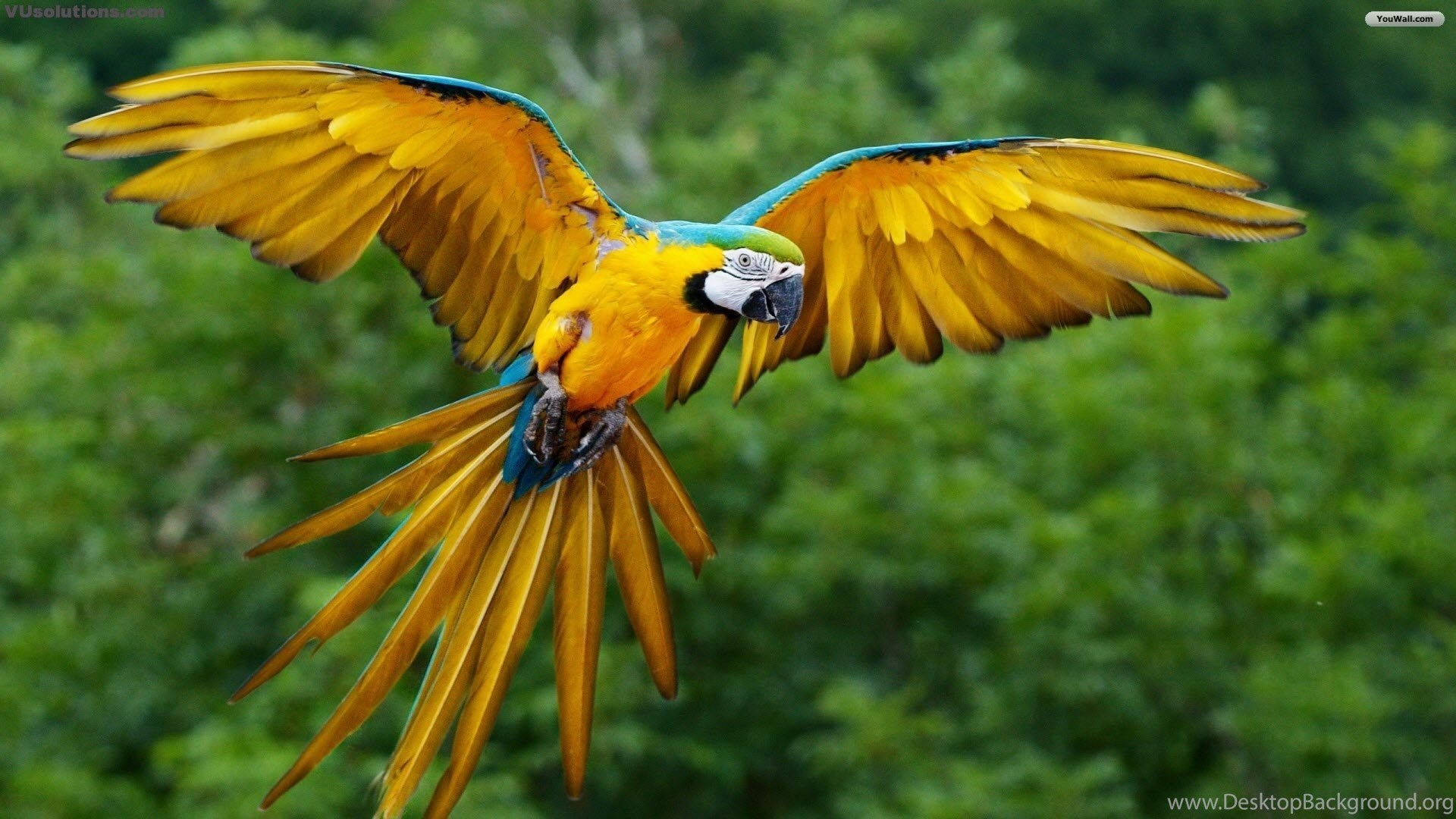Flying Birds Hd Free For Iphone Pc Desktop Hd Wallpapers Desktop Background