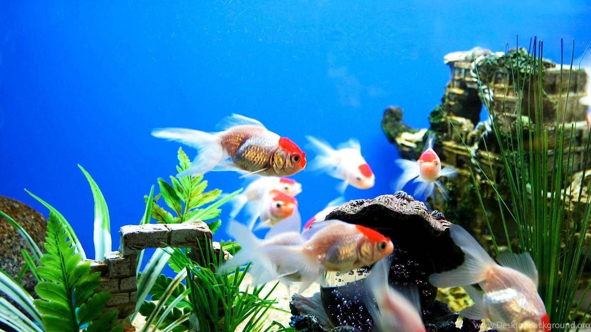 Fish Tank Free Hd Wallpapers Desktop Background