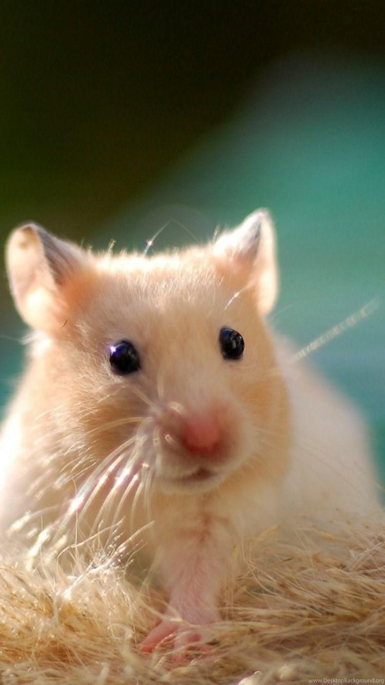 X hamster hd treesome