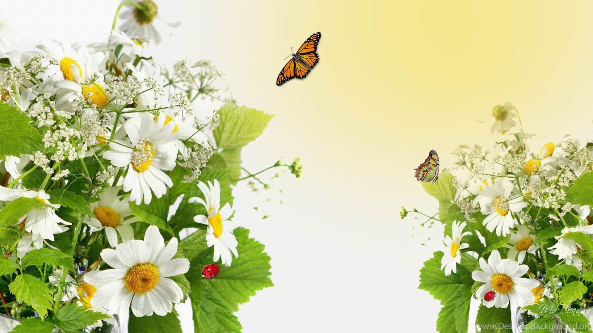 Открытка, полевые цветы фон для открытки