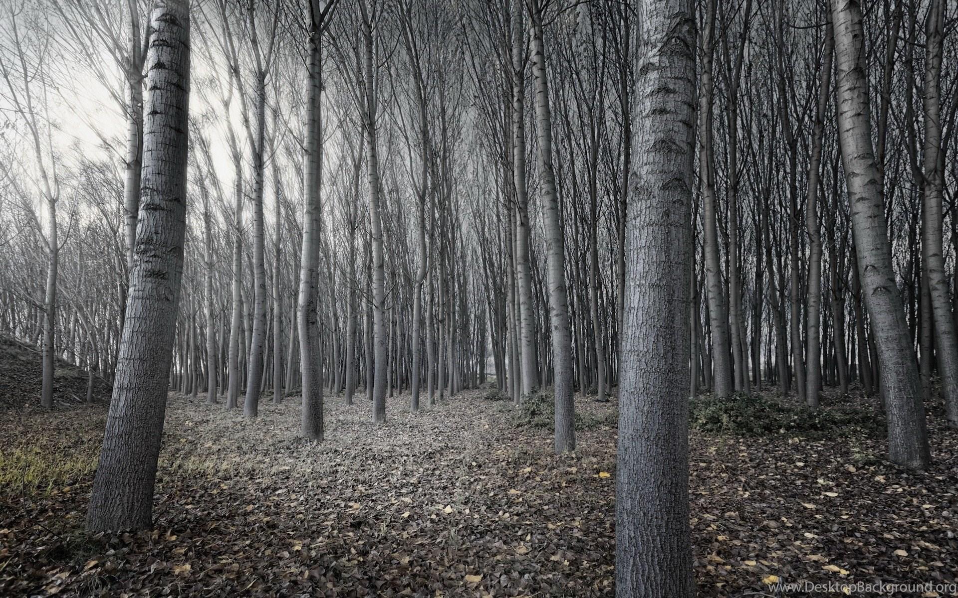 Dark Woods Wallpapers HD Desktop Background