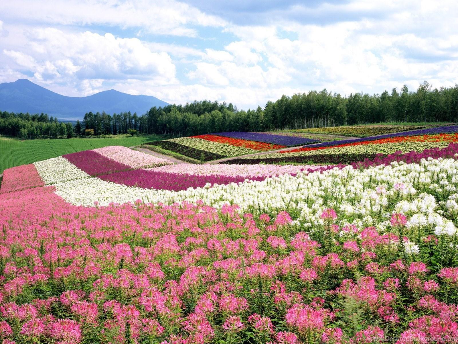 Beautiful Flower Garden Wallpapers Free Download Df7 Desktop Background