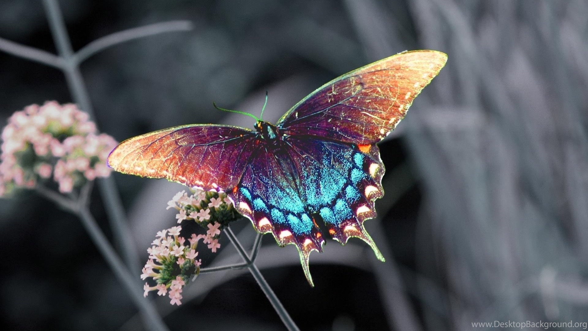 Beautiful Colorful 3d Hd Butterfly Wallpapers For ...