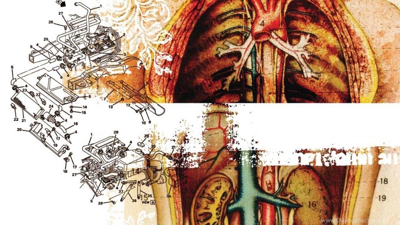 Body Engine Moar Anatomy Human Art Hd Wallpapers Wallpapers Desktop Background