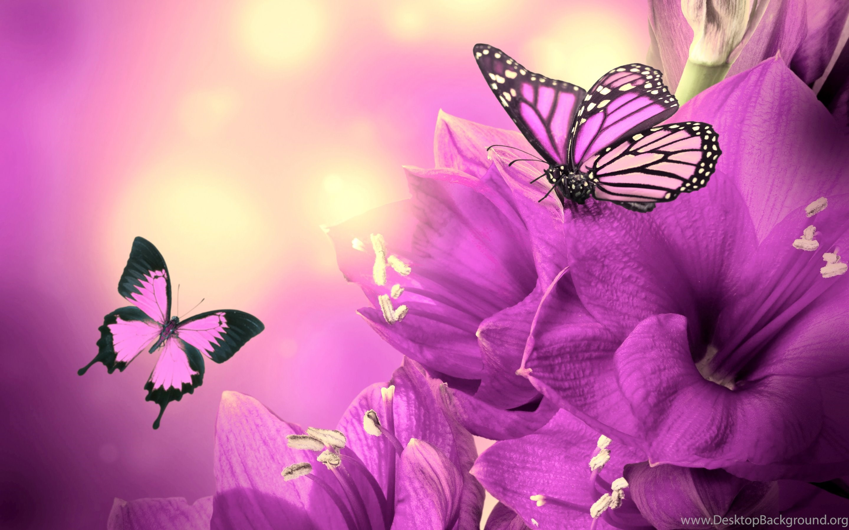 4 purple flowers butterflies :: butterfly flowers wallpapers desktop
