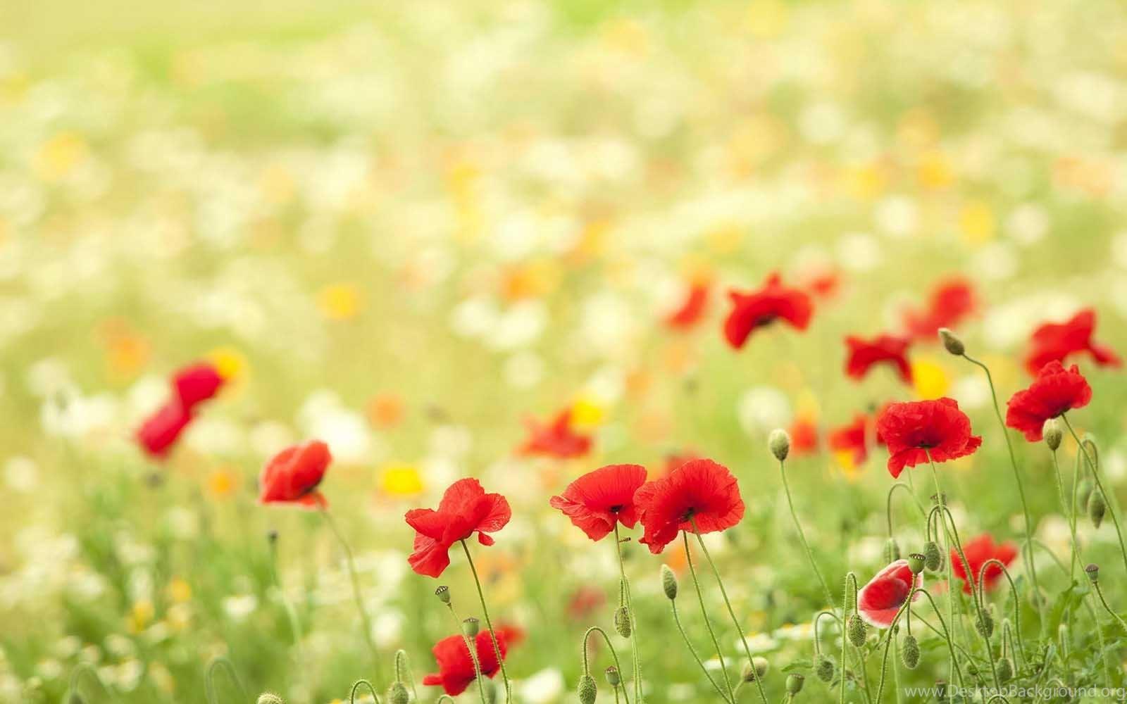Beautiful flower scenery hd wallpapers for desktop desktop background original size 1118kb izmirmasajfo