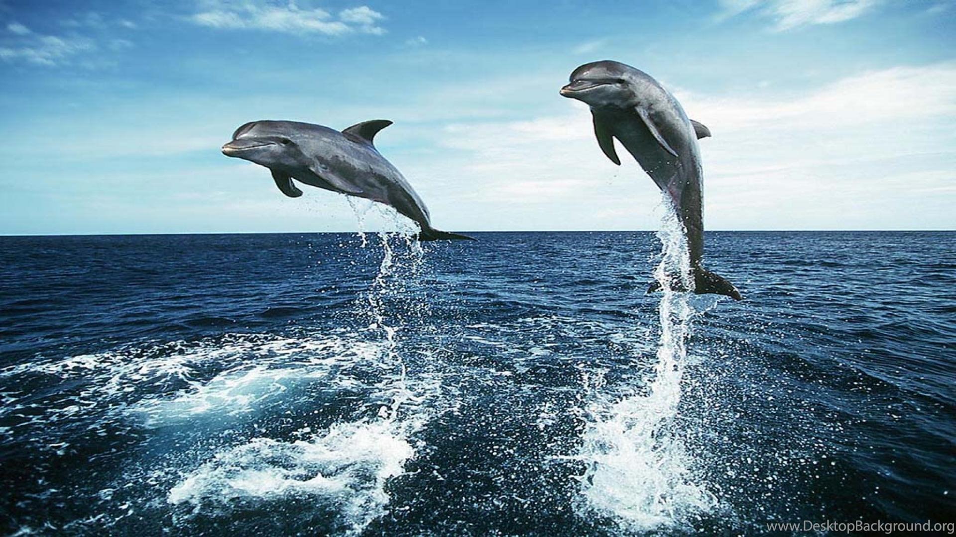 Рабочие Обои Дельфины