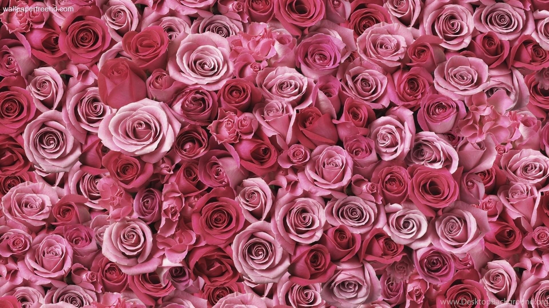 Wallpapers Dark Pink Roses Free Hd Px 1920x1080 Desktop Background