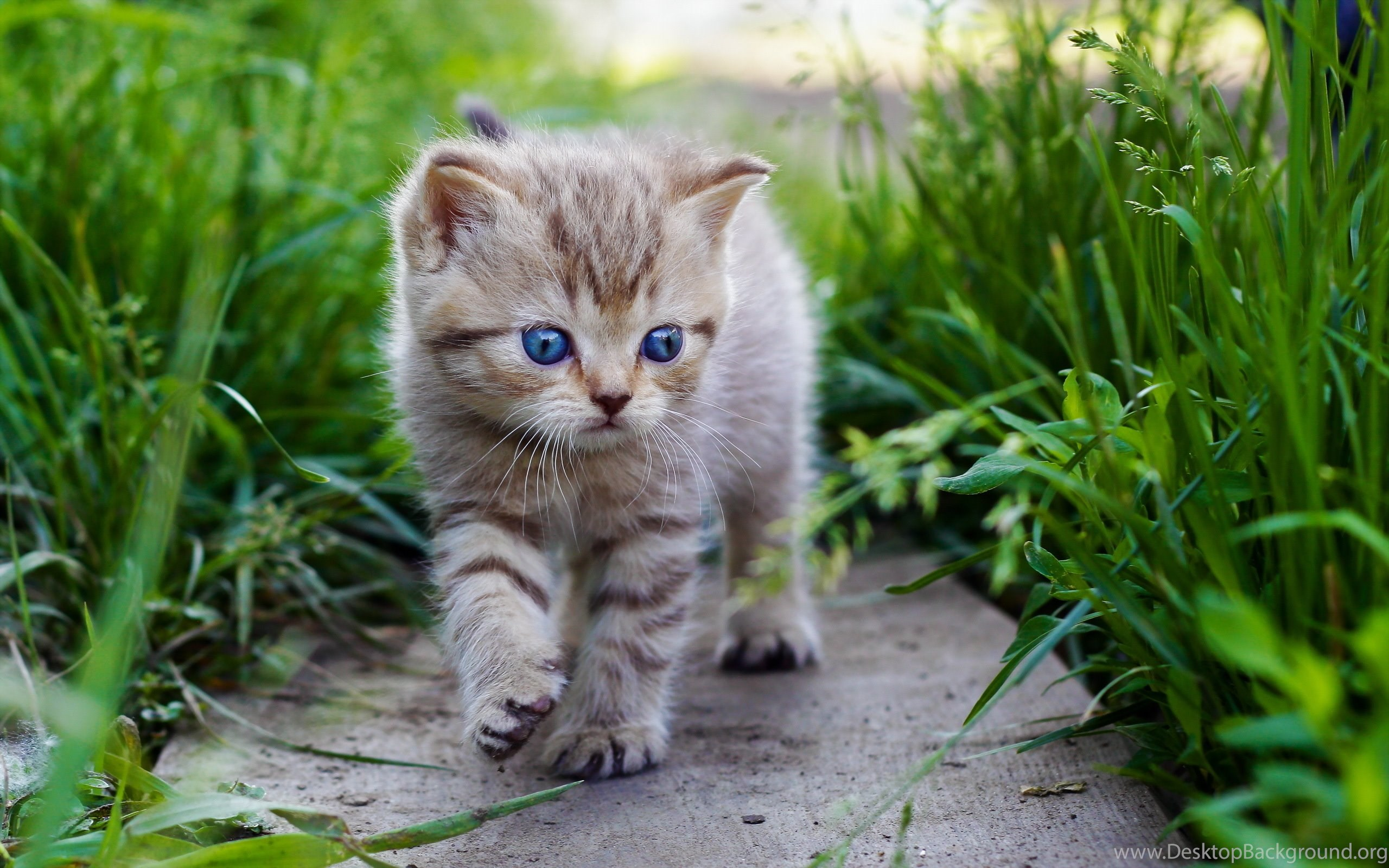 Cute Cats And Kittens Wallpaper Desktop Background