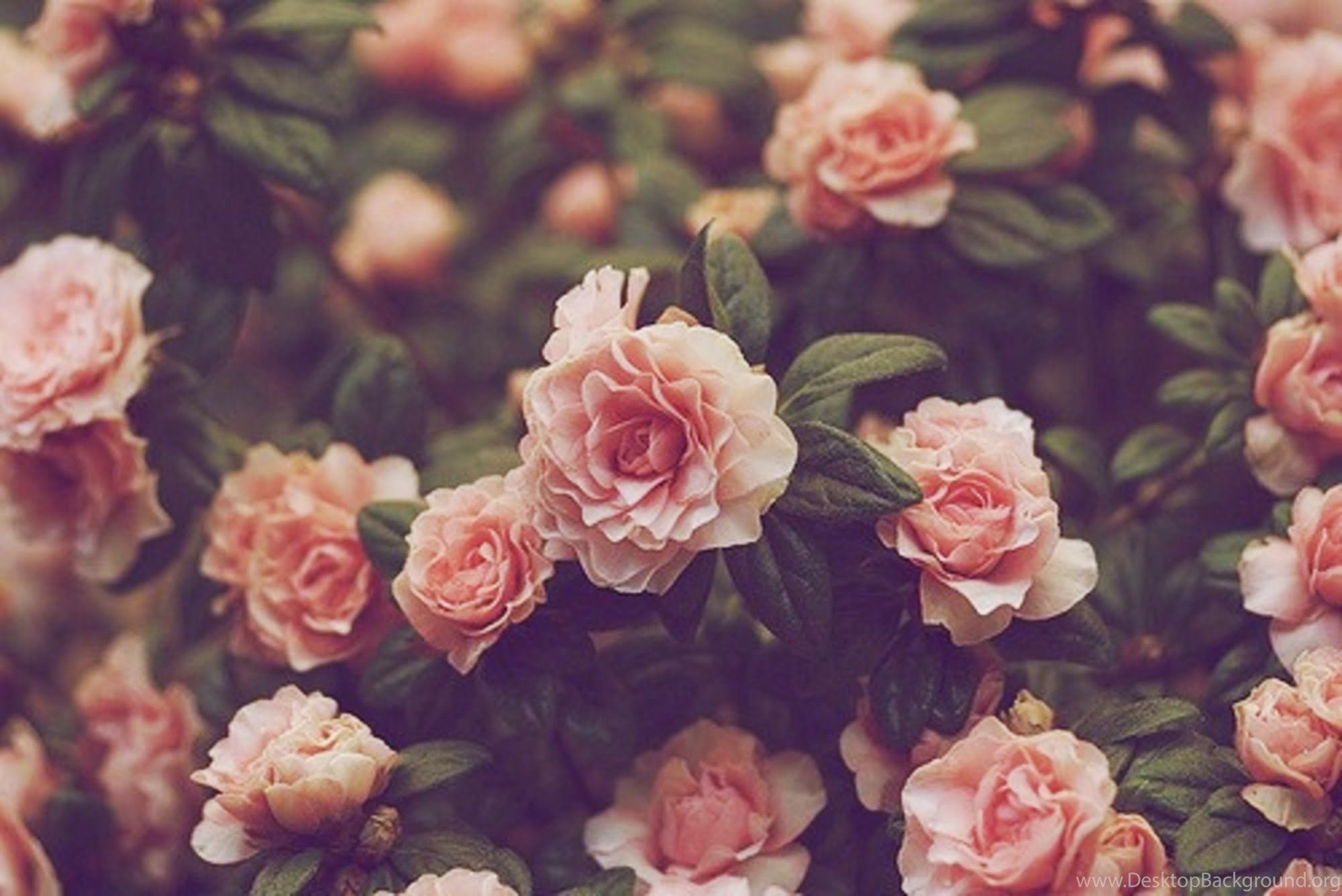Flowers Wallpapers Tumblr With Quotes Wallpapers Desktop Background
