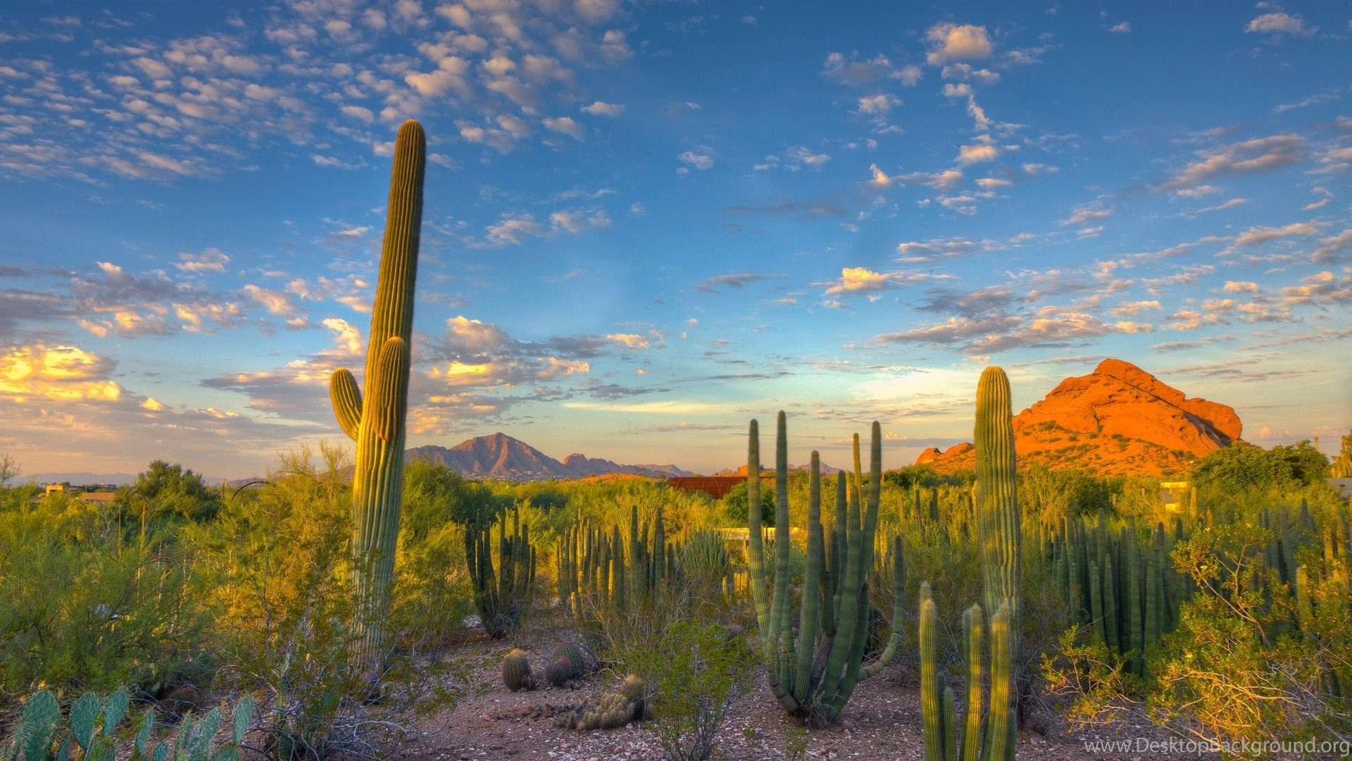 landscape, nature, desert, cactus, mountain, arizona wallpapers hd