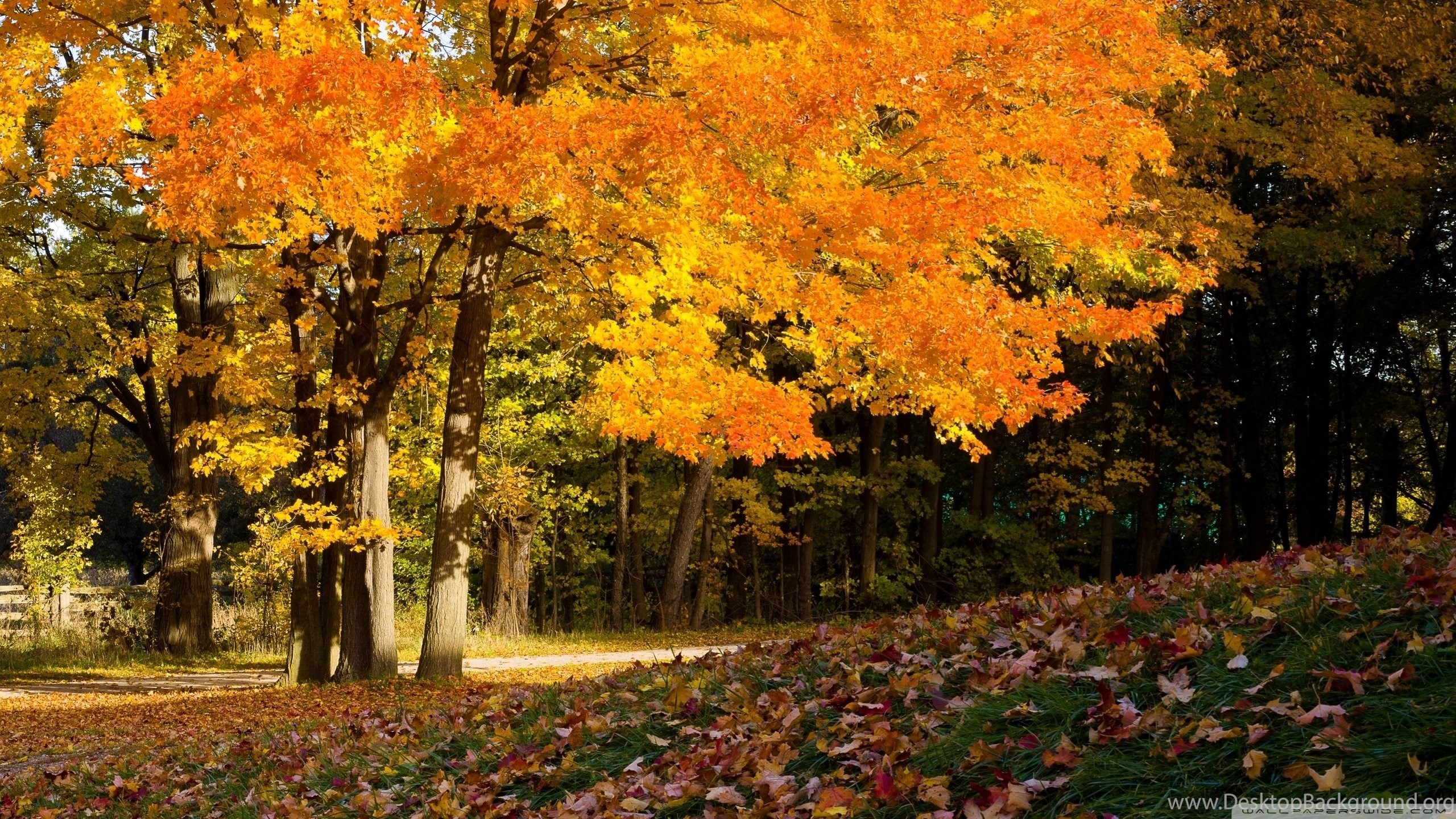 fall scene hd desktop wallpapers high definition fullscreen