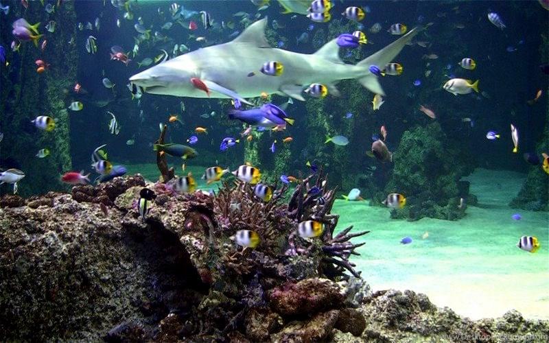 Live aquarium screensaver free download desktop background - Fish tank screensaver pc free ...
