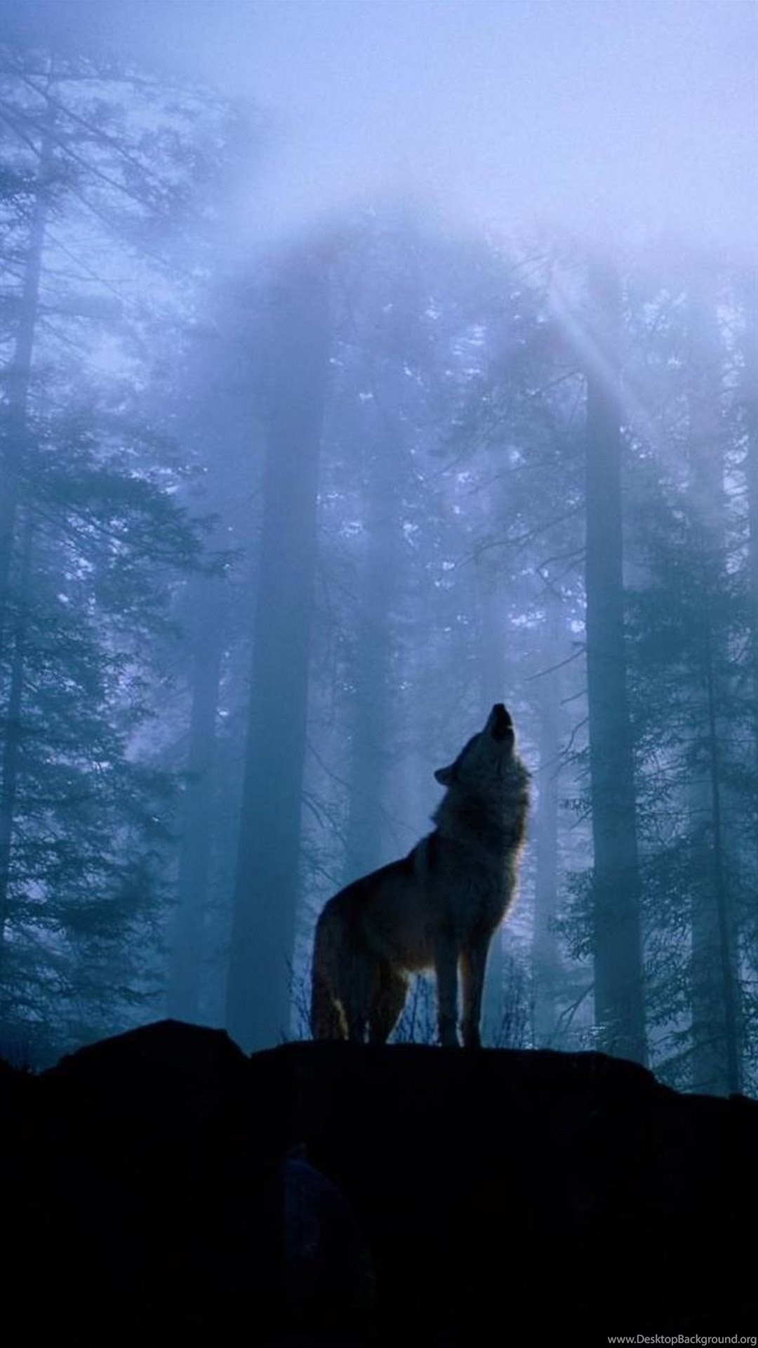 Howling Wolf Gif Iphone 6 Plus Wallpapers Desktop Background