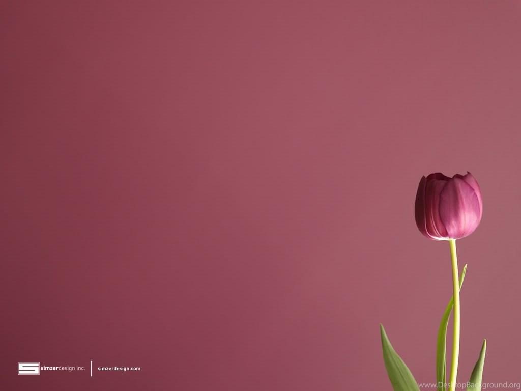Tulips Wallpapers Desktop Background