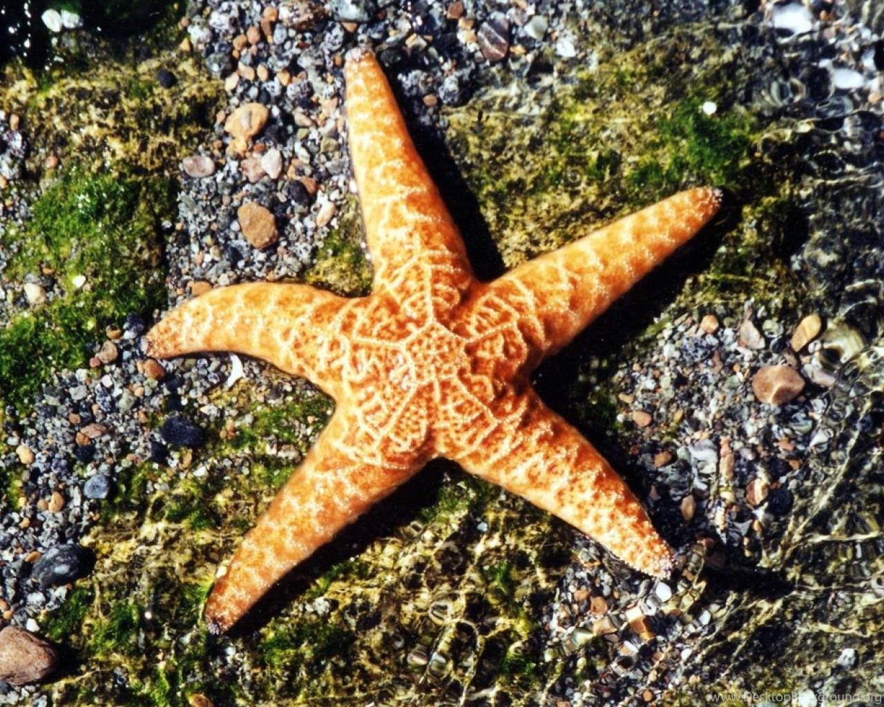 Top 27 Sea Animals Wallpapers In Hd: Starfish Sea Animals HD Wallpapers Wallpapers ( Desktop