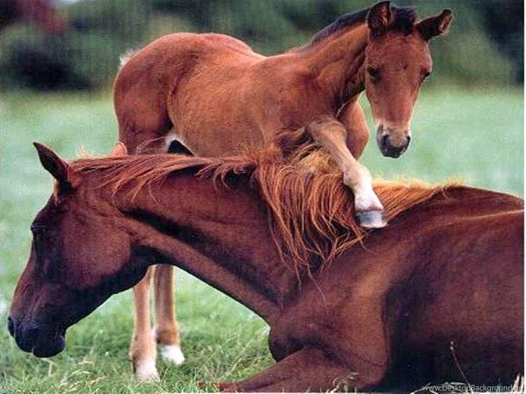 Cute Horses Big Pretty Nice Baby Horse Wanting Play Horses Free Desktop Background