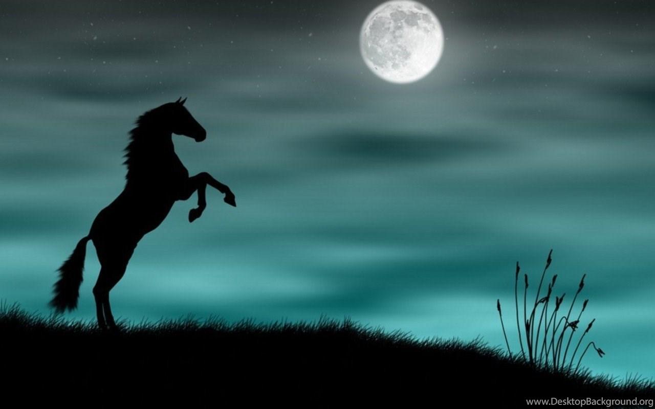 Beautiful Baby Horses Images Desktop Background