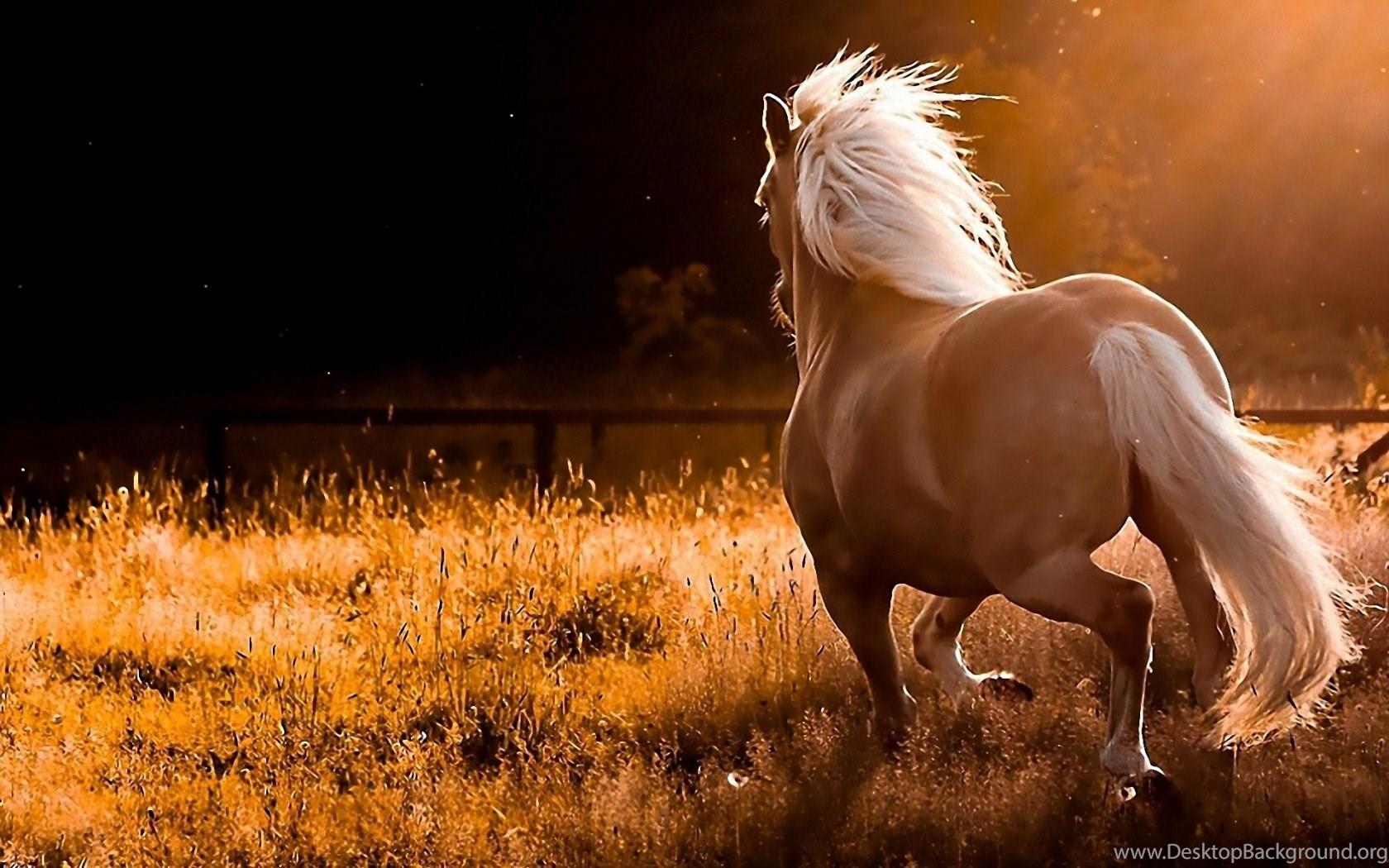 Nature running palomino horses hd wallpapersg desktop background widescreen altavistaventures Image collections
