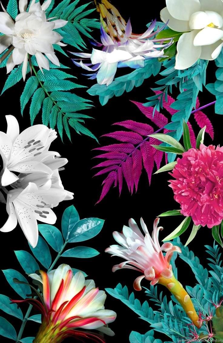 Iphone Wallpapers On Pinterest Desktop Background