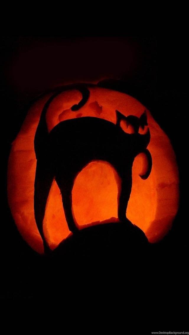 Black Cat Halloween Pumpkin Art Iphone 5 Wallpapers Ipod Desktop Background