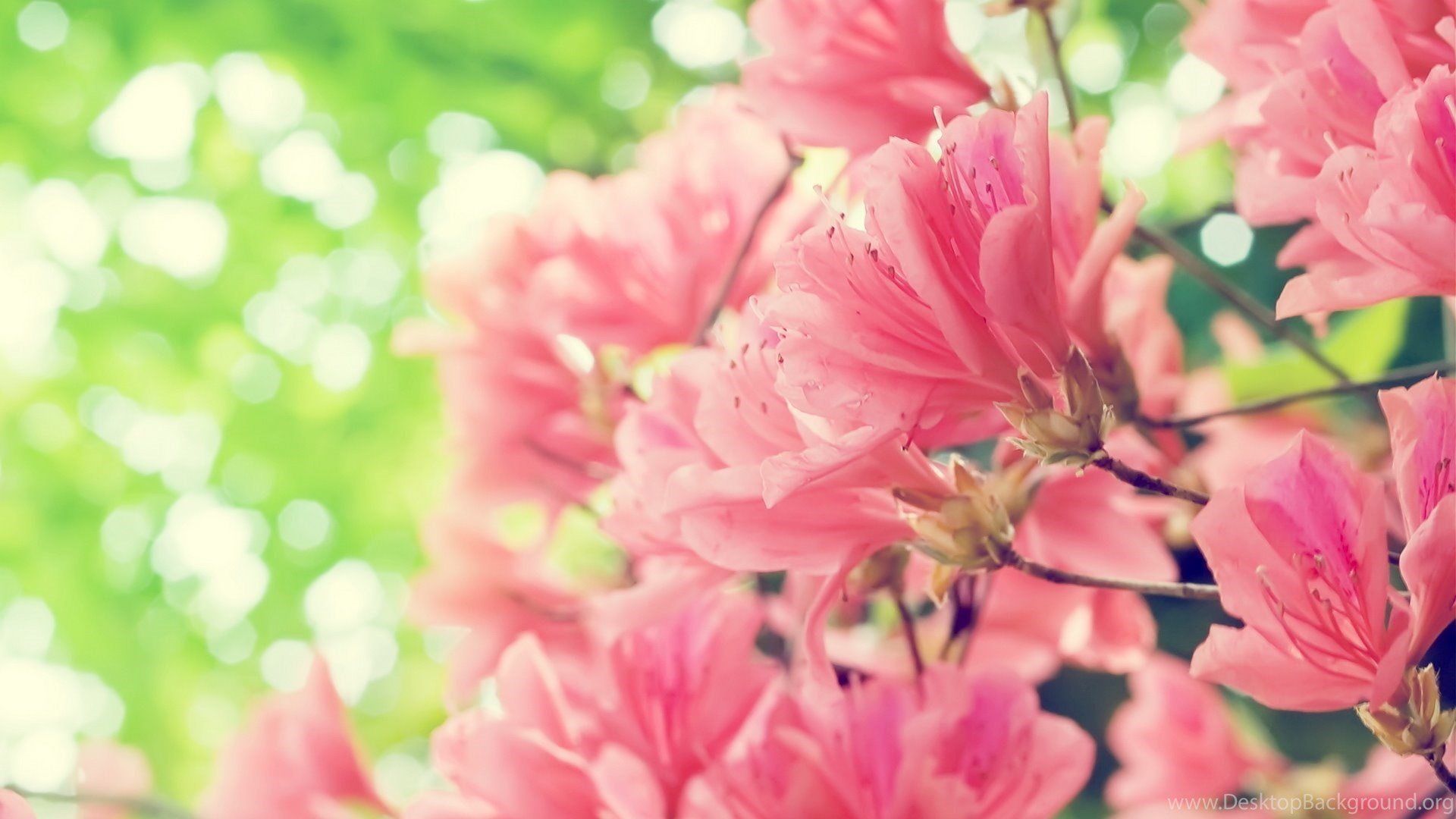 748564 Beautiful Pink Flowers Wallpapers Desktop Background