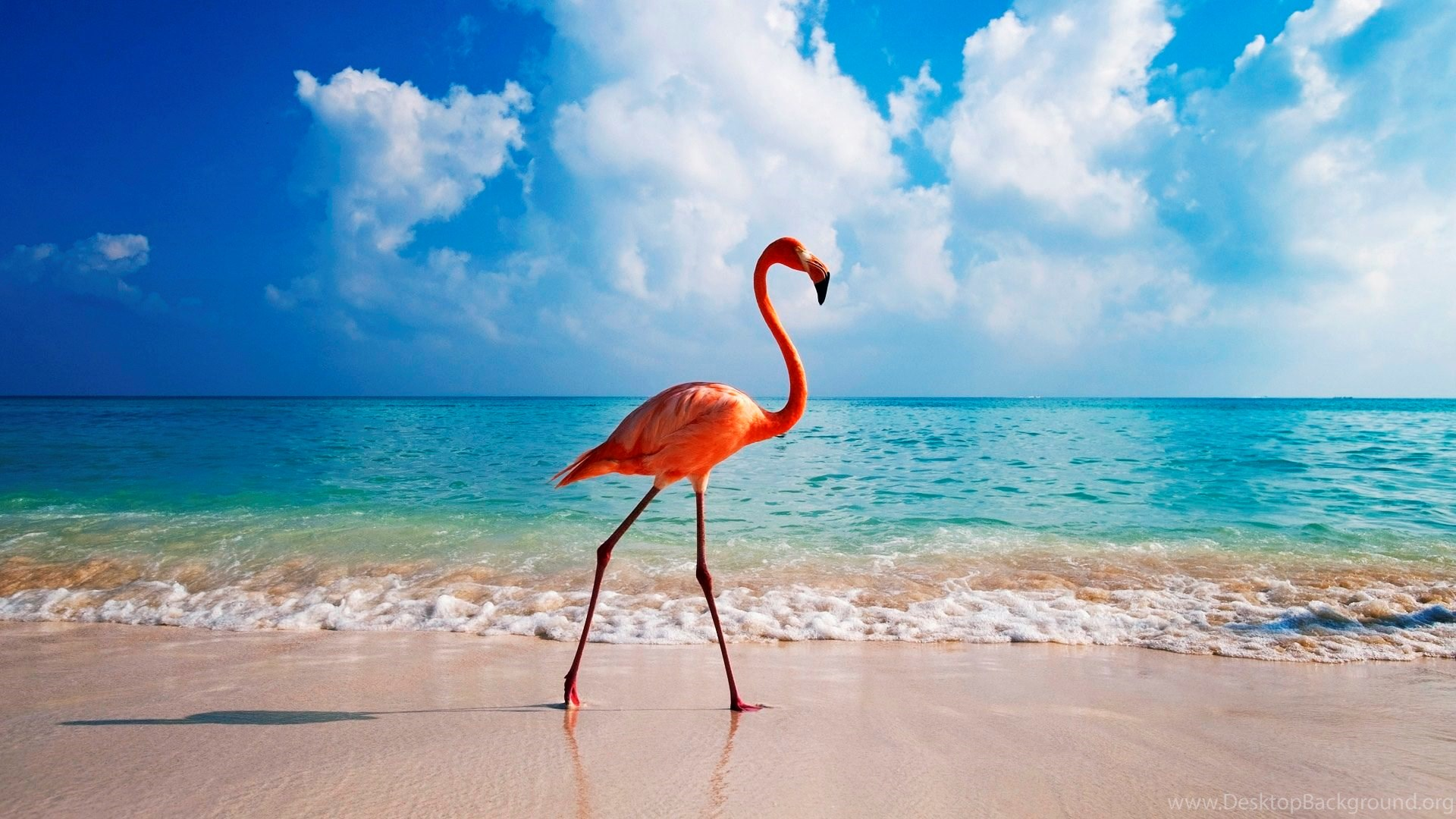 High Quality Flamingo Wallpapers Desktop Background