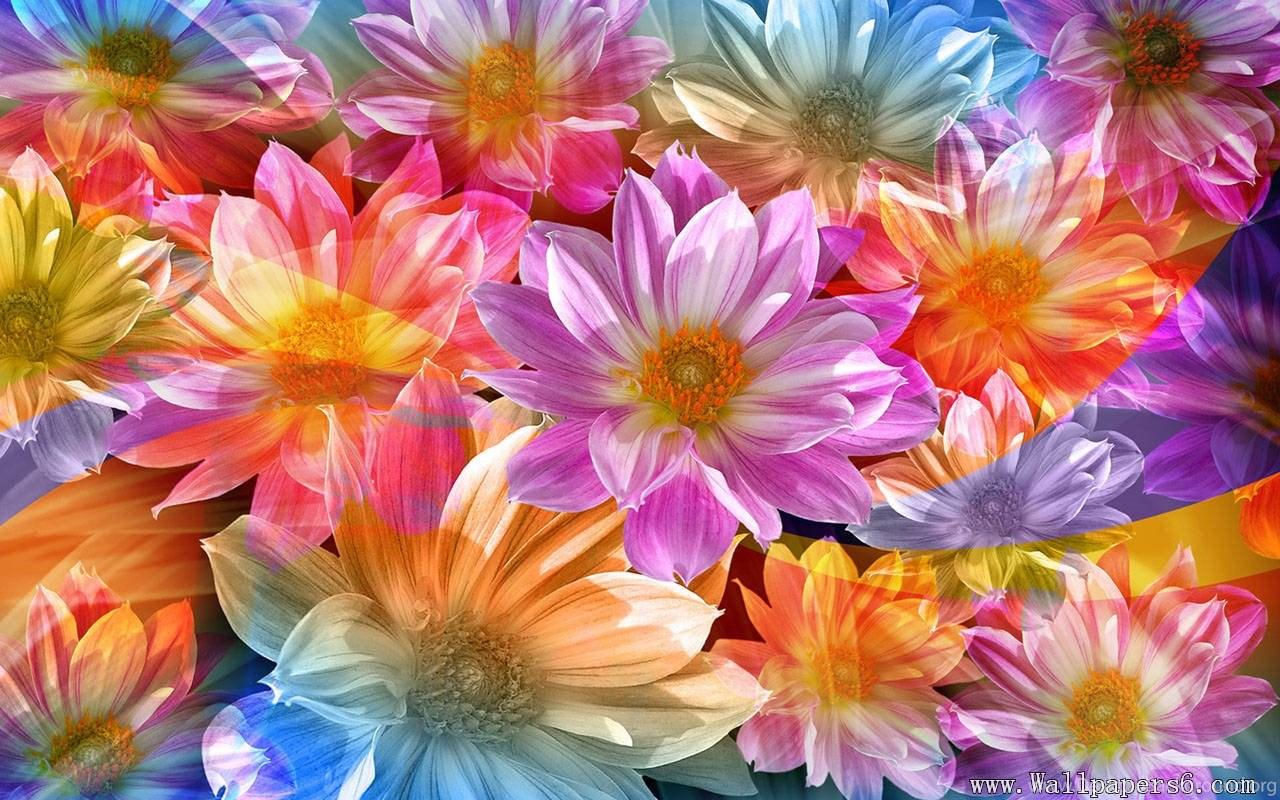 Beautiful Flowers Wallpapers For Desktop Free Download Hd Desktop