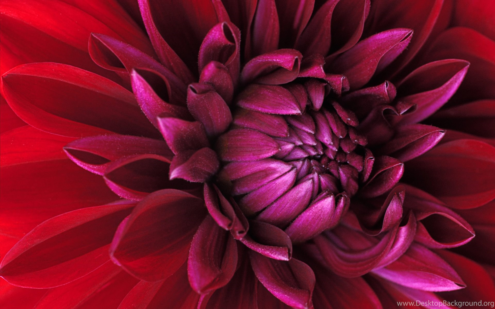 real flower wallpapers desktop backgrounds flower