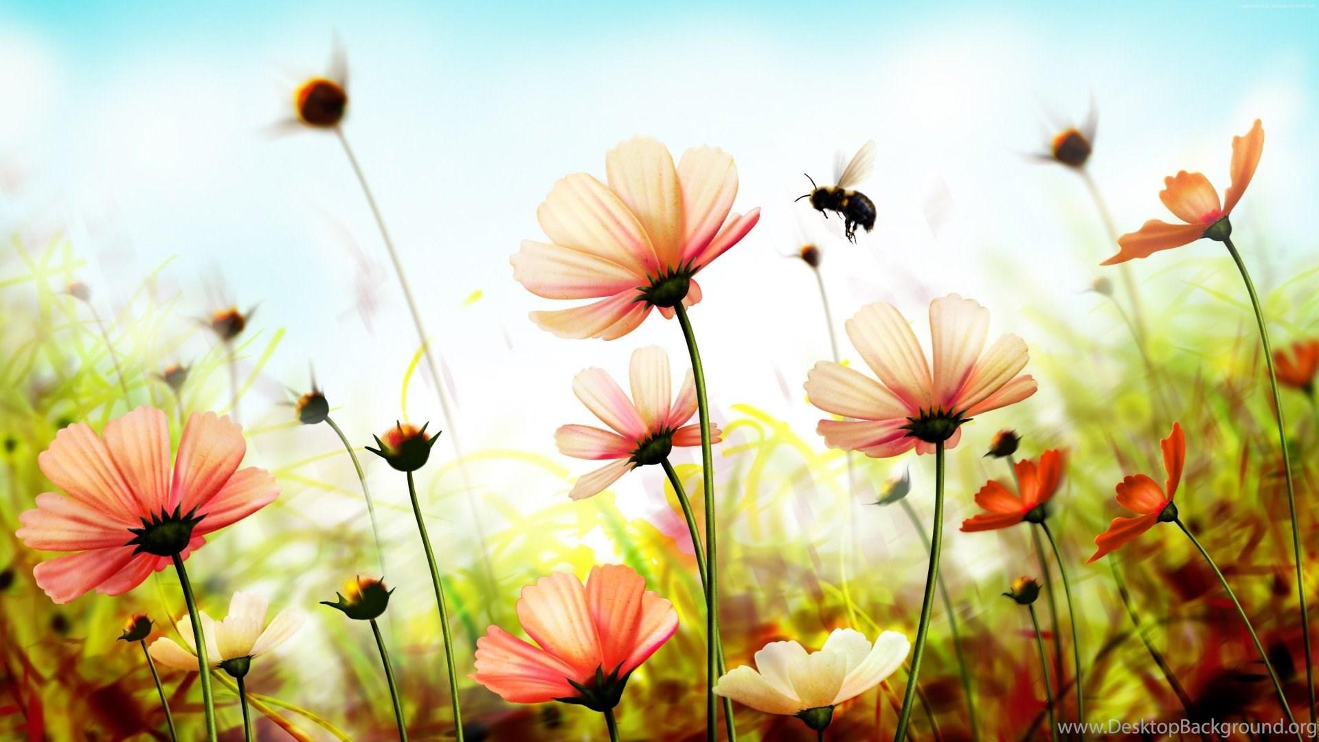 Nature flowers wallpapers hd wallpapers desktop background popular voltagebd Images