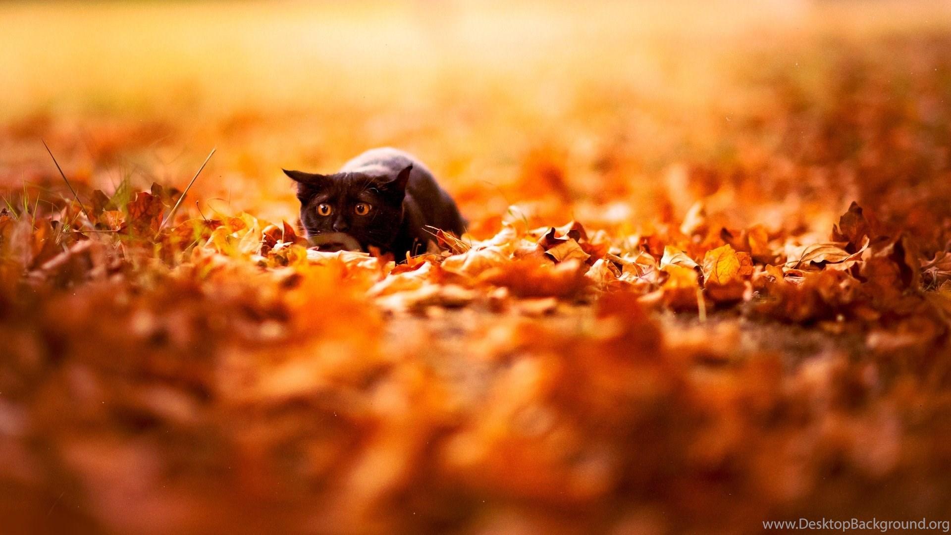 Cute Black Cat Wallpapers Desktop Background