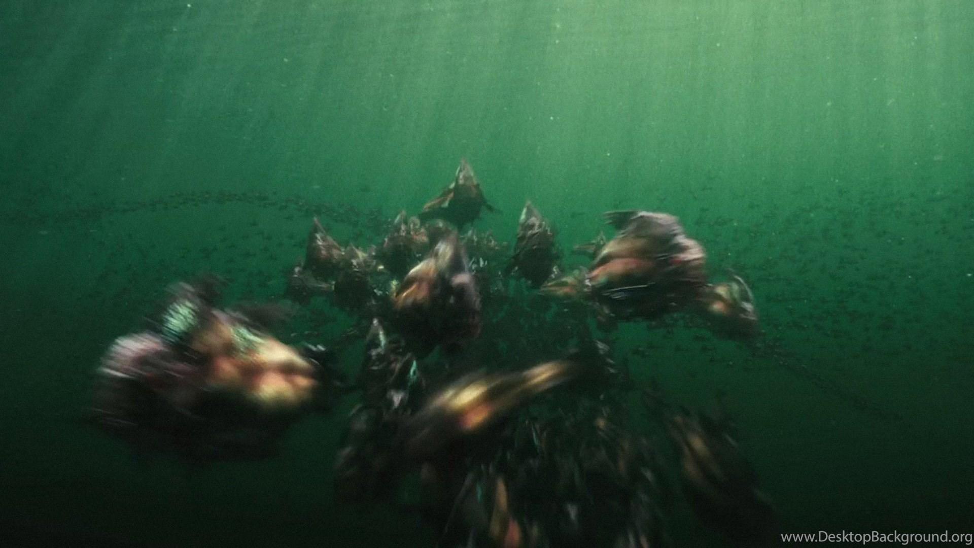 piranha killer hd wallpapers desktop background