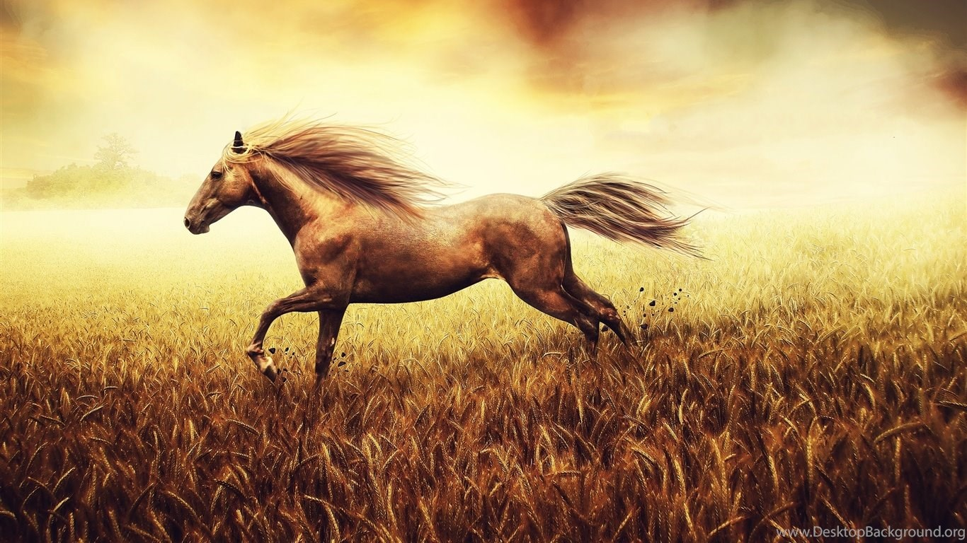 War Horse Desktop Hd Wallpaper Run Fast Desktop Background