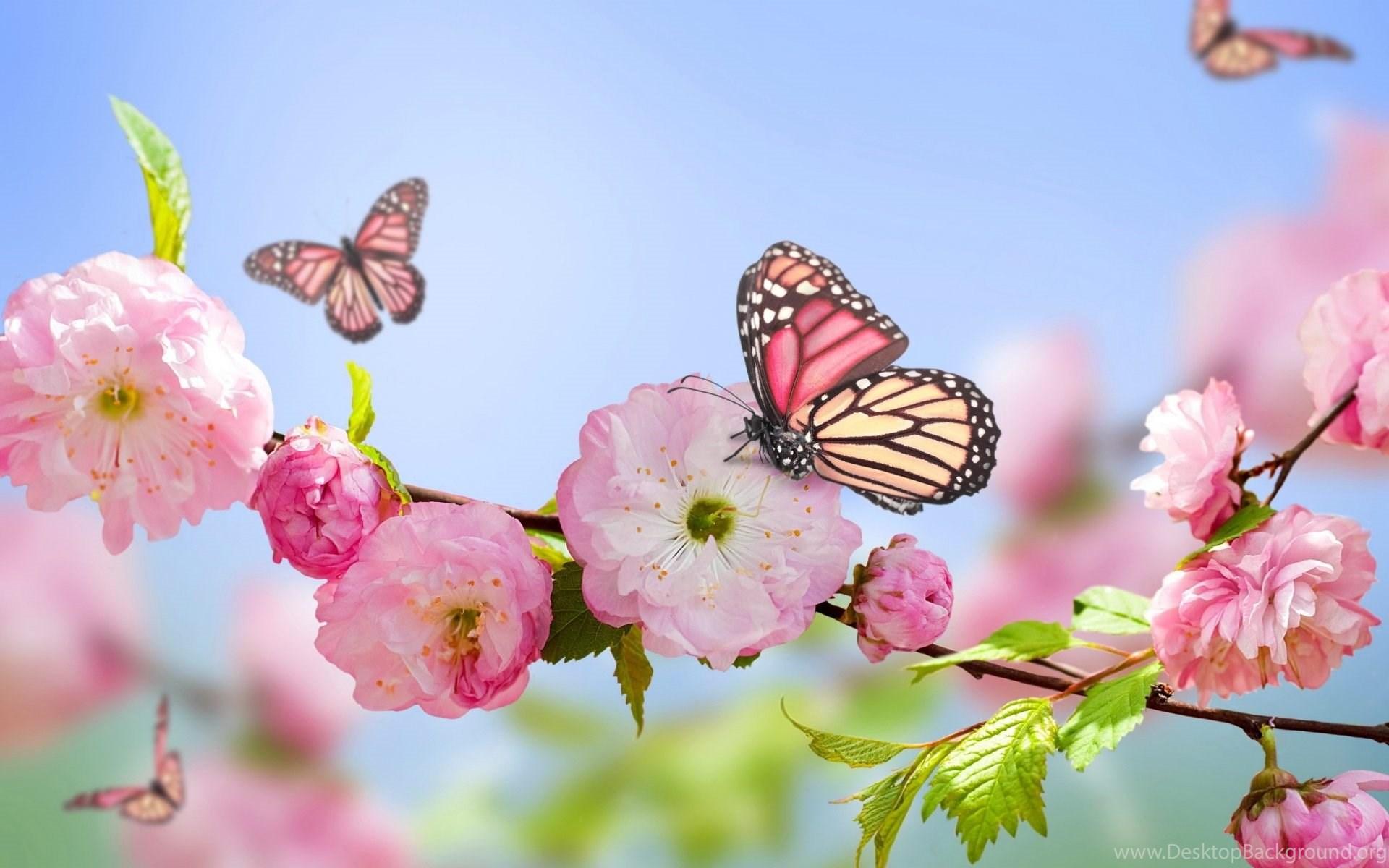 Spring Flowers And Butterflies Wallpapers Popular Flowers Desktop