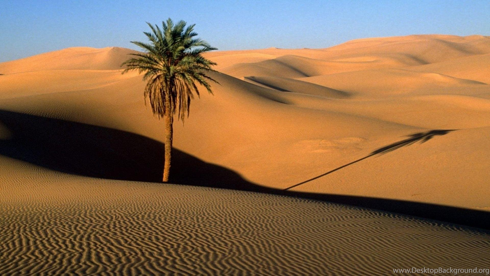 Desert Palm Trees Dunes Sahara Wallpapers Desktop Background