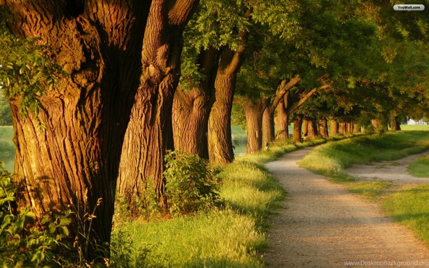 youwall big trees path wallpapers wallpaper,wallpapers,free