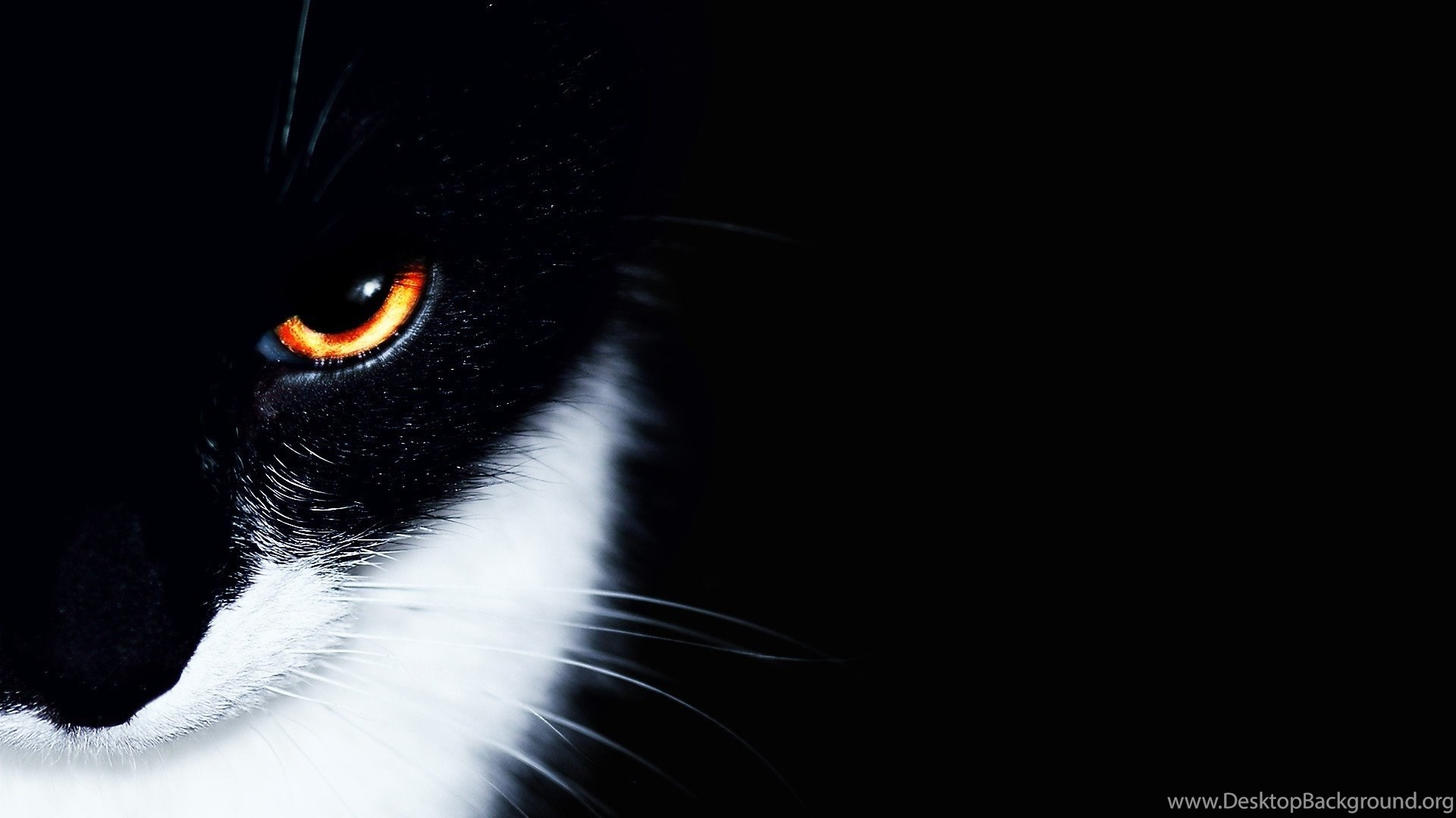 Hd Wallpapers 1920x1080 Animals Cat Black White Eye Hd Petpictures
