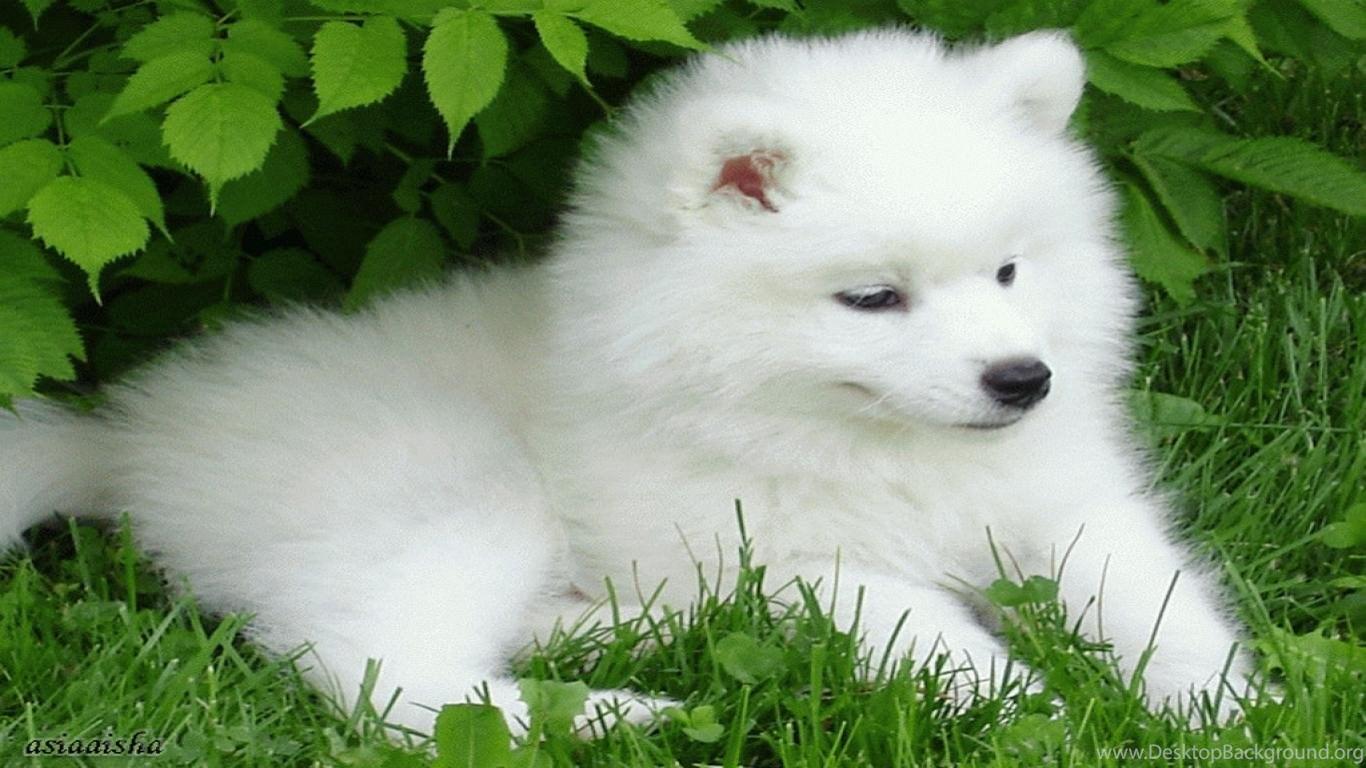 Cute Puppy Christmas Wallpapers Desktop Background