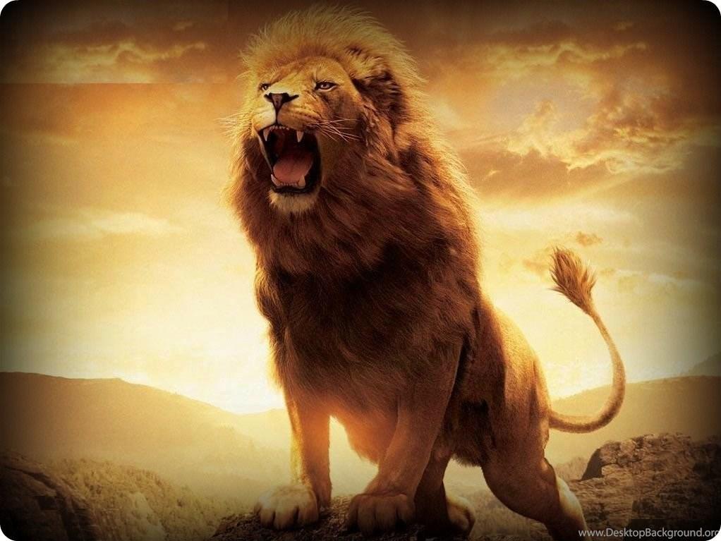 Roaring Lion Pictures Wallpapers 3d Hd Desktop Background